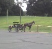 Amish_wagon